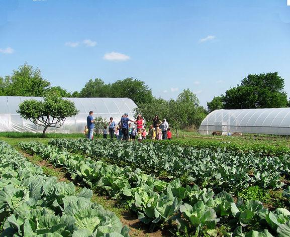 Homeschool Families Touring Dayempur Farm
