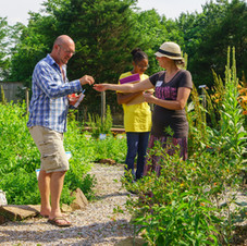 Getting to Know the Herbs