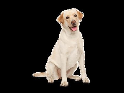 tes dog website.png