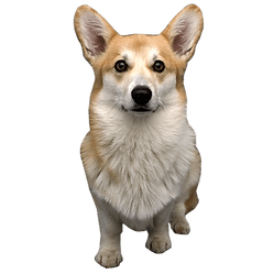 doggy.png