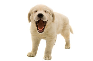 puppy tes.png