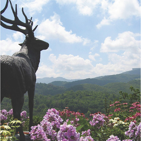 Silver Springs Farm Estates | Lots Start At $47,250