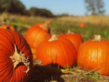 Charlotte's Finest Five | Pumpkin Patches