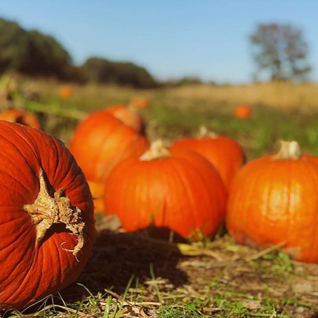 Charlotte's Finest Five | Pumpkin Patches