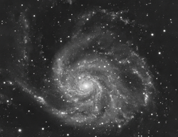 M101_8hrs_best_LUM_clone_ABE1-denoise_cr