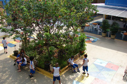 Colégio Soma Arvore