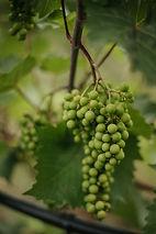 Harper's Trail Winery - Photographer