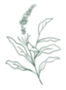 botanical-01.png