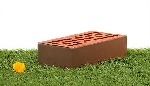 1нф ФЛЭШ - Гладкий - на траве.JPG