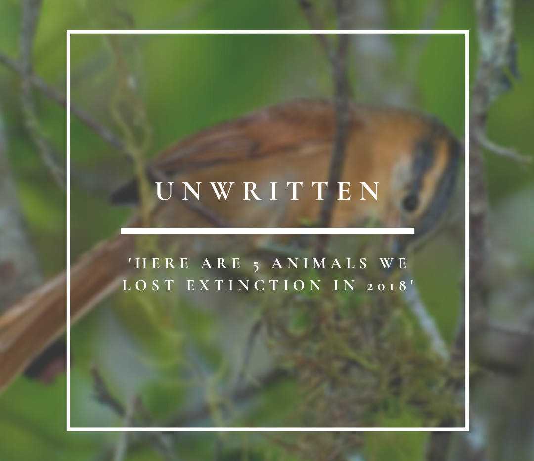 Unwritten | Here Are 5 Animals We Lost To Extinction In 2019