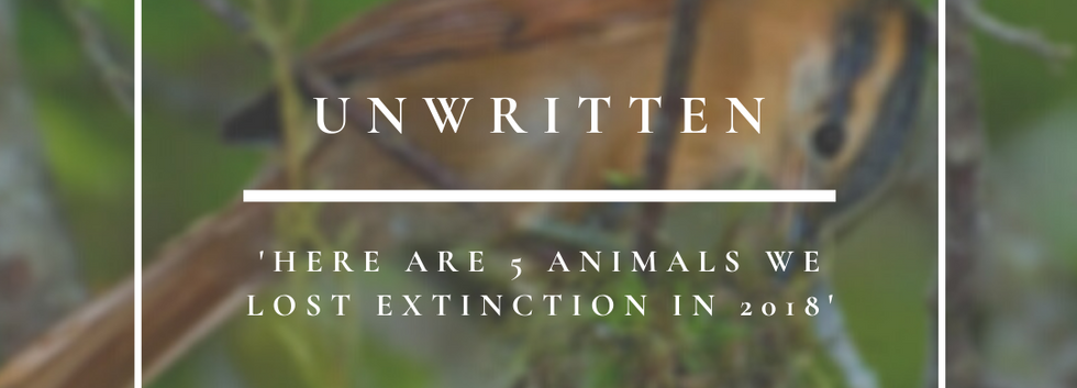 Unwritten   Here Are 5 Animals We Lost To Extinction In 2019