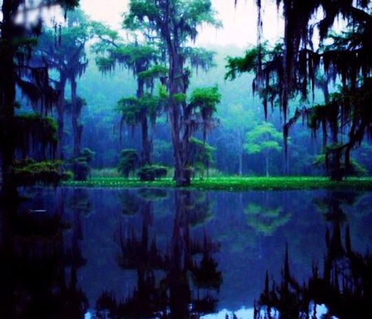 A dark and mysterious southern swamp