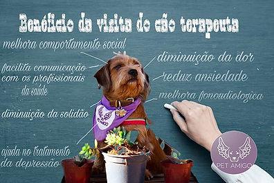 Alguns benefícios que o cão terapeuta pr