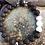 Thumbnail: Gzhi, The Elegant, Grounding Bracelets for men