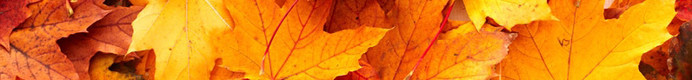 autumn_leaves_banner.jpg