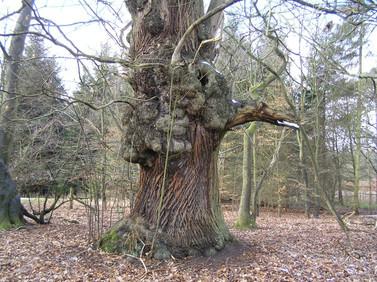 Albury_Park_Spirit_Tree.JPG