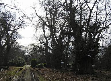 Albury_Park_Trees.JPG