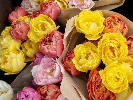 Årets blomstersesong erklæres herved for for åpnet!