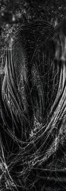WALLPAPER 2560x1440pxls - FEAR OF FEAR.png