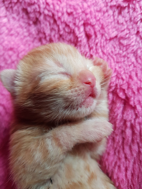 Freshly born kitten
