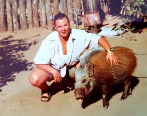 Bush pig pet