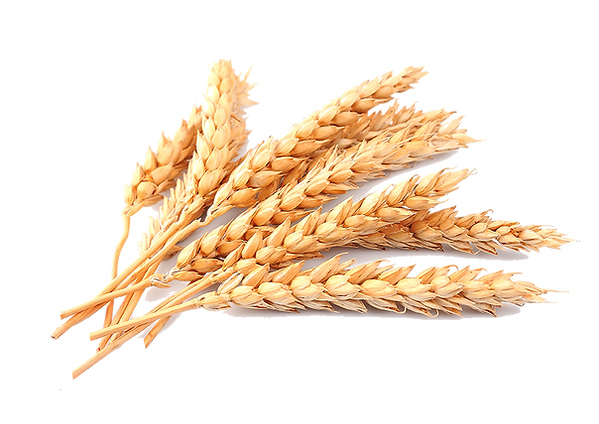 Wheat - 850x602.png