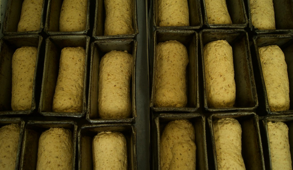 Granary weighed down, in the tins ready for baking