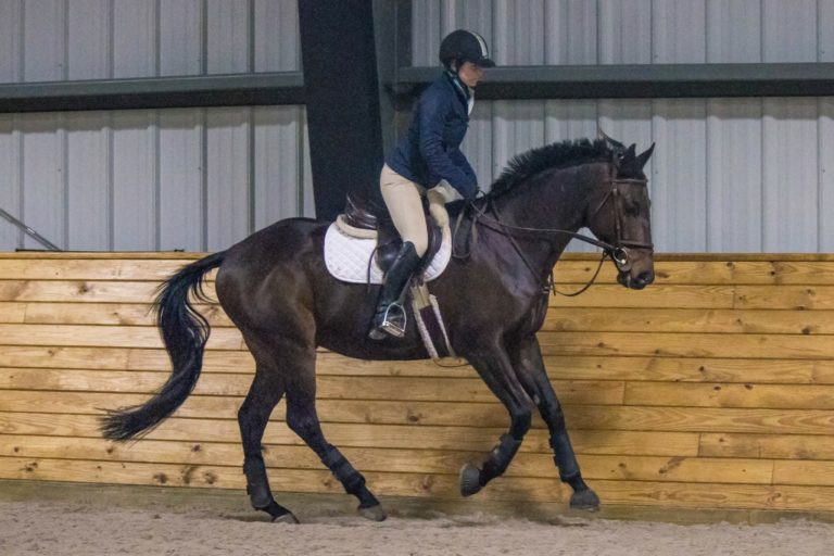 Teddy (aka cutest horse in the world) has learned to trust his trainer, Kaitlyn, and they are a beautiful pair to watch!