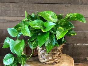 Flora to Help You Flourish