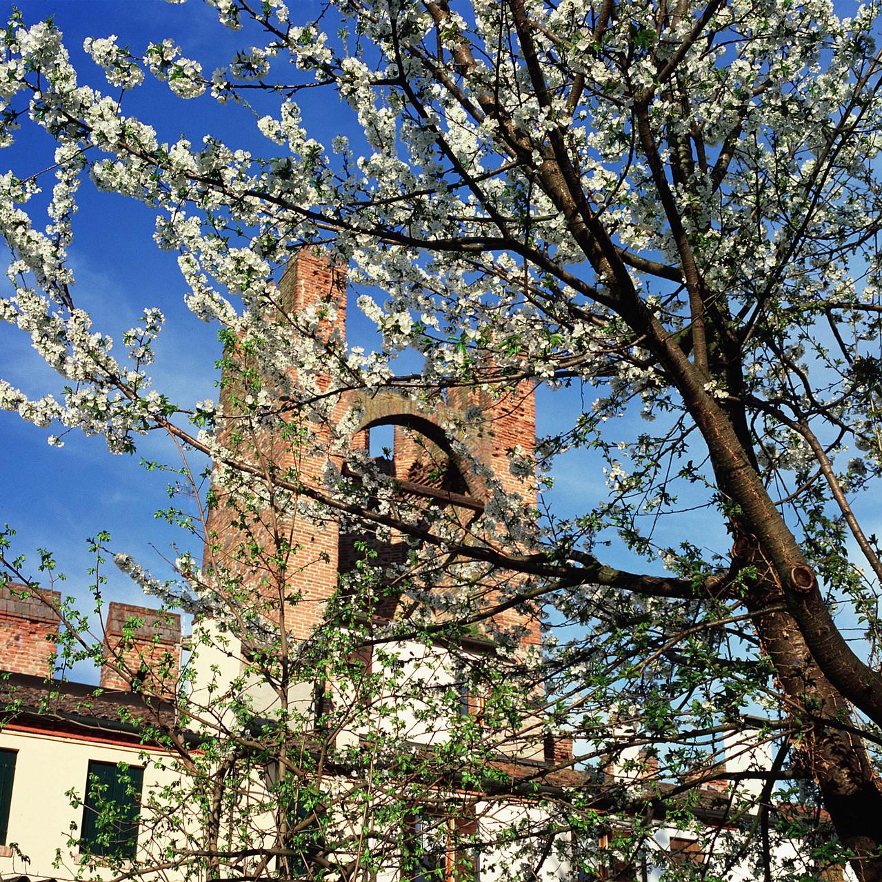 Primavera (7)