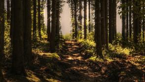 Prämie zum Erhalt  und nachhaltigen Bewirtschaftung von Wäldern.