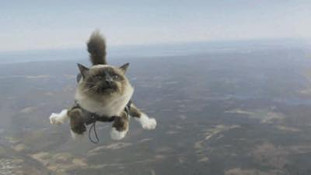 Parachute Jump Challenge