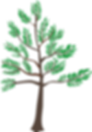 Young-Cedar-Tree-2015080315.png