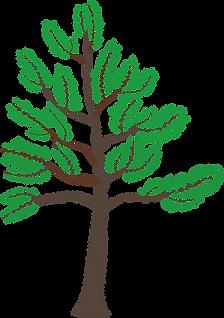 Young-Cedar-Tree-2015080315.png