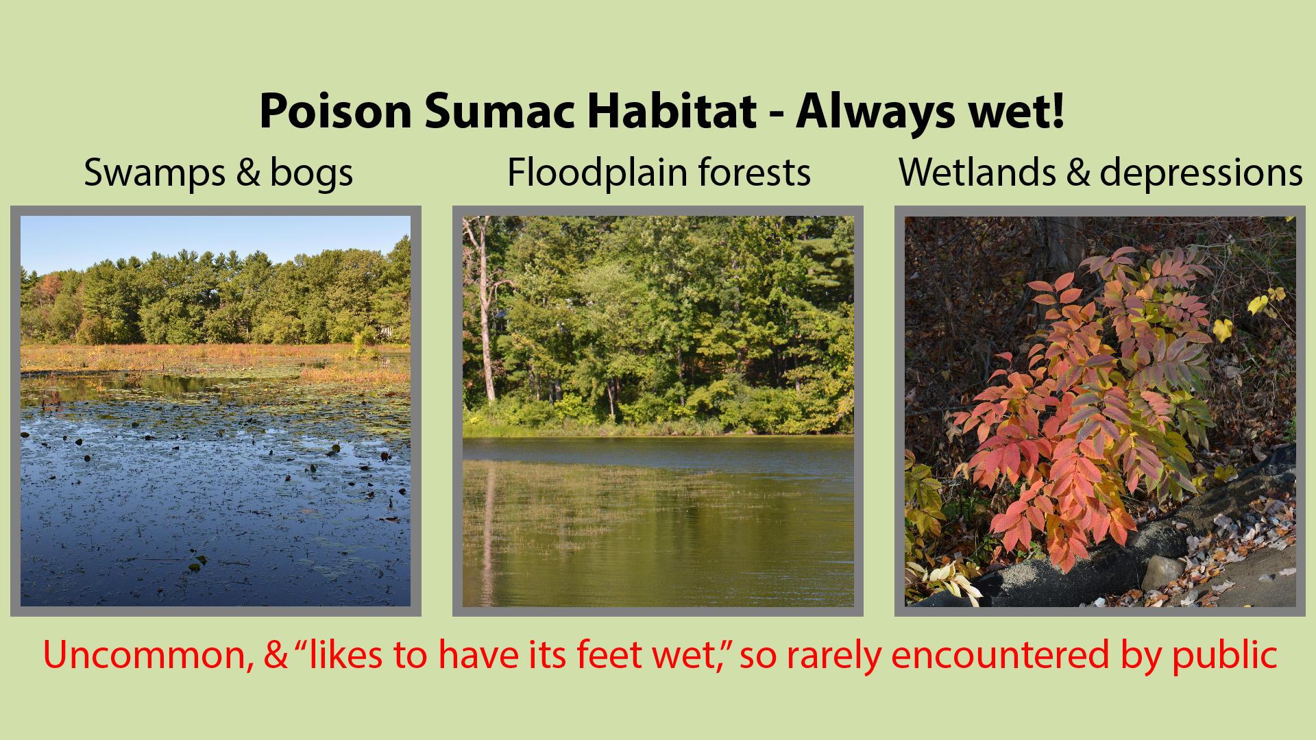 Poison Sumac Habitat