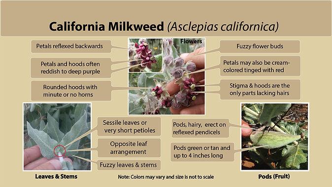 ID_california_MW.jpg