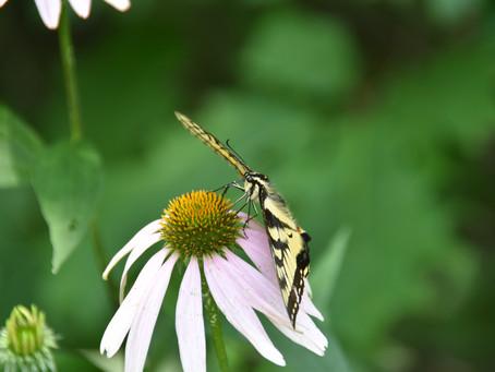 June 22-28 is Pollinator Week!