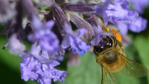 June 21st-26th is Pollinator Week!