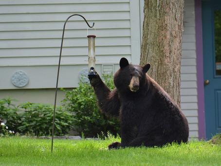 'Tis the season to... take down your bird feeders!