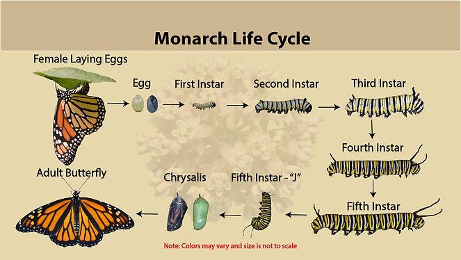 MON_Lifecycle2.jpg