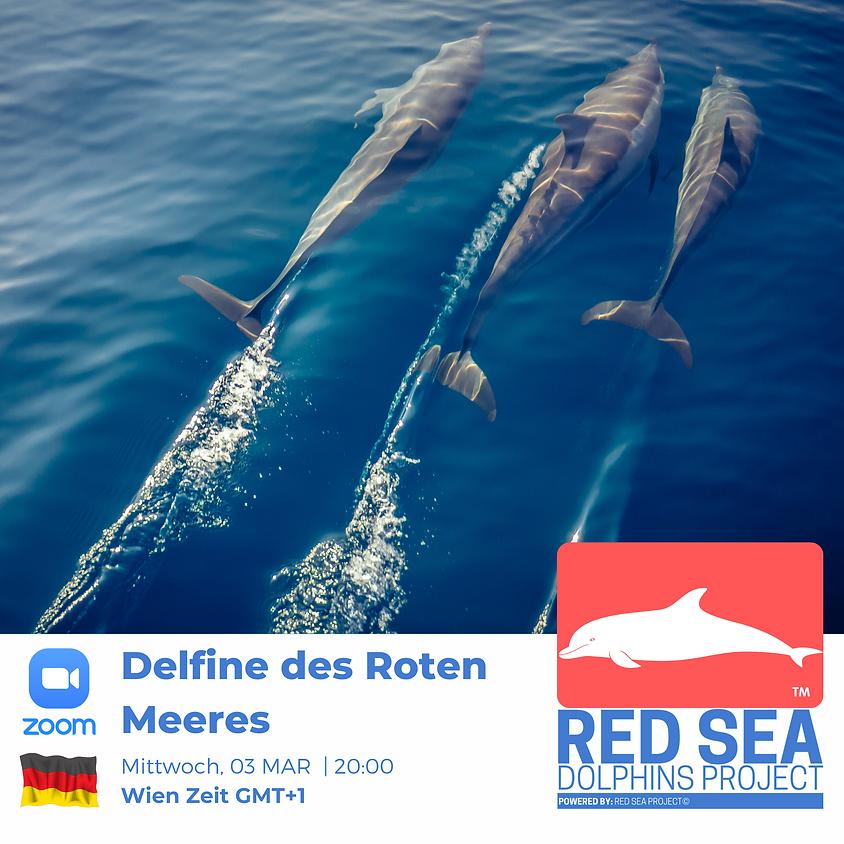 Delfine des Roten Meeres