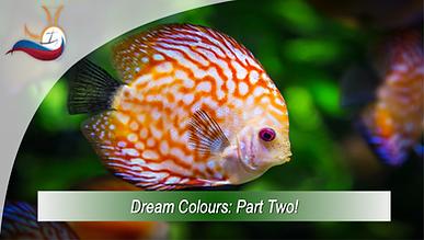 Dream Colour Part Two.png