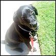 dog walker | dog walking | pet sitting | cat sitter