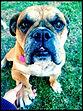 dog walker san diego | pet sitter | dog walking | cat sitter