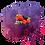 Thumbnail: Toppingcream Frutos del bosque
