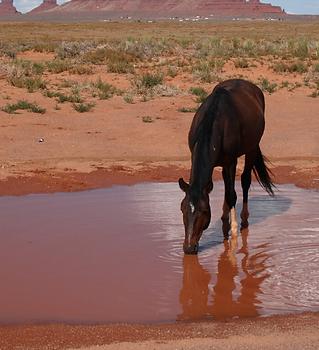 Water 4 AZ  (2).png