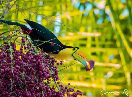 Aves avistadas en el Sur de Quintana Roo