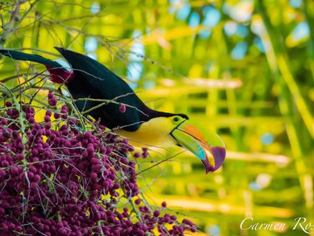 Aves hermosas en el Sur de Quintana Roo