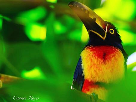 Los mejores lugares para pajarear en el Sur de Quintana Roo