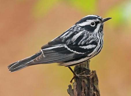 Guía básica para iniciarse en el avistamiento de aves.